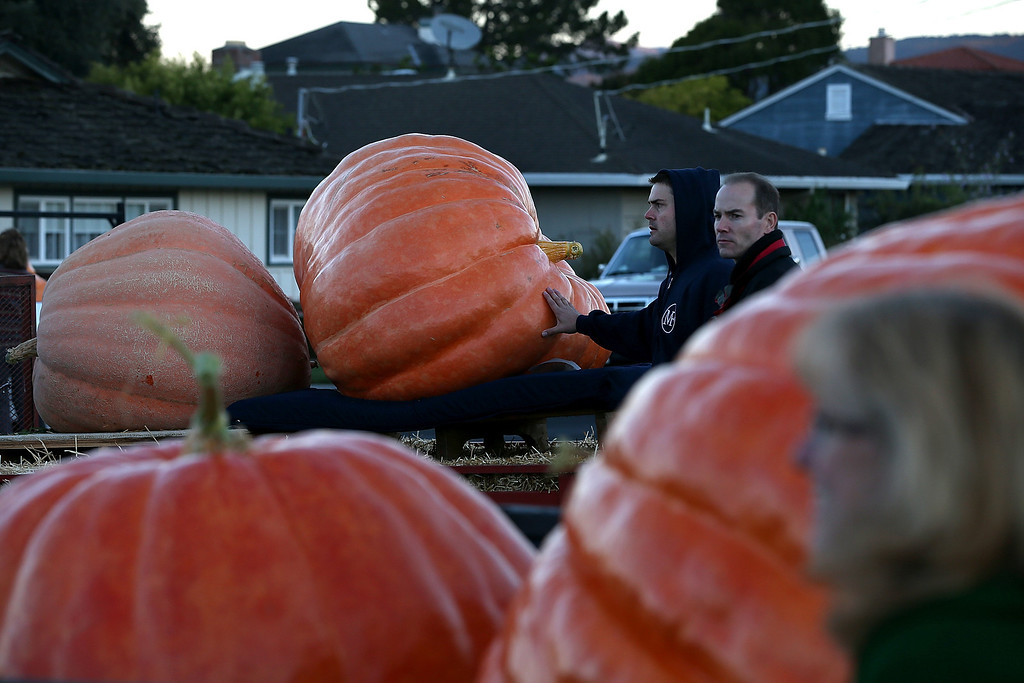 . Giant pumpkins sit in truck beds before the 40th Annual Safeway World Championship Pumpkin Weigh-Off on October 14, 2013 in Half Moon Bay, California. (Photo by Justin Sullivan/Getty Images)