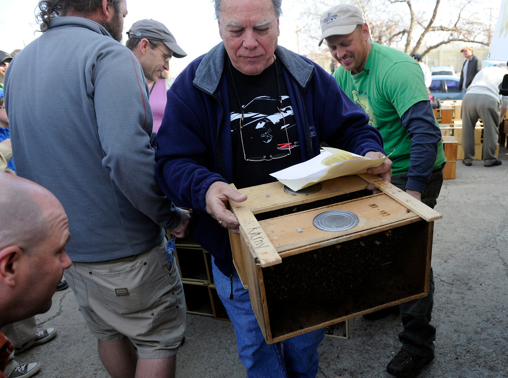 . DENVER, CO - MAY 4: Dave Chadwick gathers his Carniolan bees that he will take to a hive in Pagosa Springs, CO.About 300 backyard beekeepers are on hand to pick up their package bees from Apis Hive Co. out of Grand Junction, CO. Each package contains about 10,000 workers and drones as well as one queen. (Photo By Kathryn Scott Osler/The Denver Post)