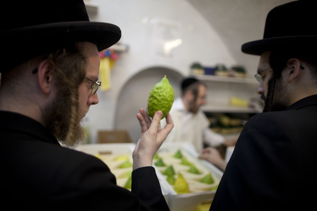 . Ultra Orthodox Jews inspect an Etrog (citron) fruit which will be used during the upcoming Jewish festival of Sukkoth in the religious Mea Shearim neighbourhood September 15, 2013 in Jerusalem, Israel. The Feast of the Tabernacles, which begins Wednesday evening September 18, 2013, commemorates the biblical Hebrews\' 40 years of wandering in the desert after the exodus from Egypt some 3200 years ago.  (Photo by Lior Mizrahi/Getty Images)