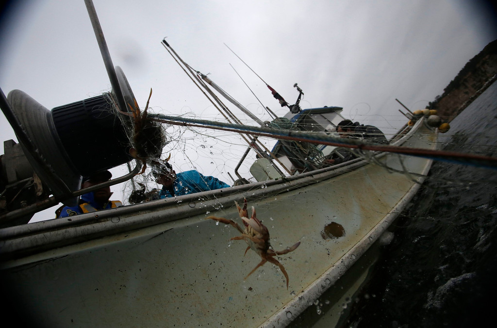 """. A crab is hauled aboard the \""""Shoei Maru\"""" fishing boat, close to Hirono town, about 25 km (19 miles) south of Fukushima Daiichi nuclear power plant, Fukushima prefecture May 26, 2013. Operated by 80-year-old Shohei Yaoita and 71-year-old Tatsuo Niitsuma, the boat\'s catch will be used to test for radioactive contamination in the waters near the Fukushima Daiichi nuclear facility. Commercial fishing has been banned near the tsunami-crippled nuclear complex since the March 2011 tsunami and earthquake. The only fishing that still takes place is for contamination research, and is carried out by small-scale fishermen contracted by the government.  Picture taken May 26, 2013. REUTERS/Issei Kato"""