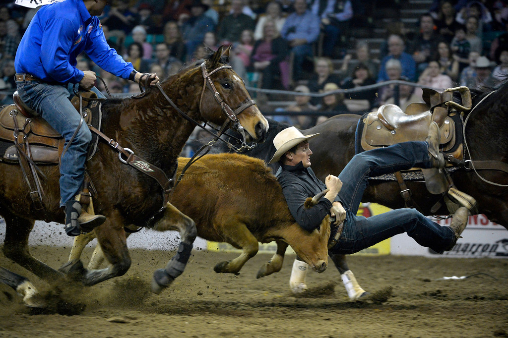 . DENVER, CO- JANUARY 27:   Sean Santucci, of Prineville, Oregon takes down a steer during the steer wrestling event. The final day of the 2013 National Western Stock show was Sunday, January 27th.  One of the big events for the day was the PRCA Pro Rodeo finals in the Coliseum.  The event featured bareback riding, steer wrestling, team roping, saddle bronc riding, tie down roping, barrel racing and bull riding.  (Photo By Helen H. Richardson/ The Denver Post)