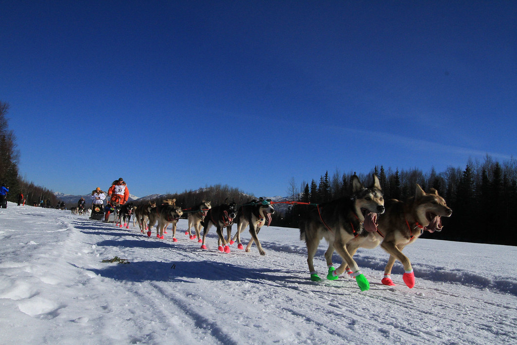 . Jake Berkowitz of Big Lake, Alaska, drives his dog team along Campbell Air Strip near the end of the ceremonial start of the 2014 Iditarod Trail Sled Dog Race on Saturday, March 1, 2014, in Anchorage, Alaska. (AP Photo/Dan Joling)