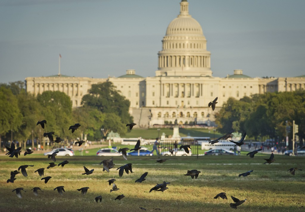 . A flock of birds takes flight on the National Mall in front of the US Capitol building in Washington, DC, October 14, 2013.  The crisis over a US government shutdown and debt ceiling standoff continues into the third week of the shutdown. With just three days before the US Treasury exhausts its borrowing authority, and the government entering its third week of a crippling shutdown, lawmakers have scrambled to work out a deal that would resolve both crises. MLADEN ANTONOV/AFP/Getty Images