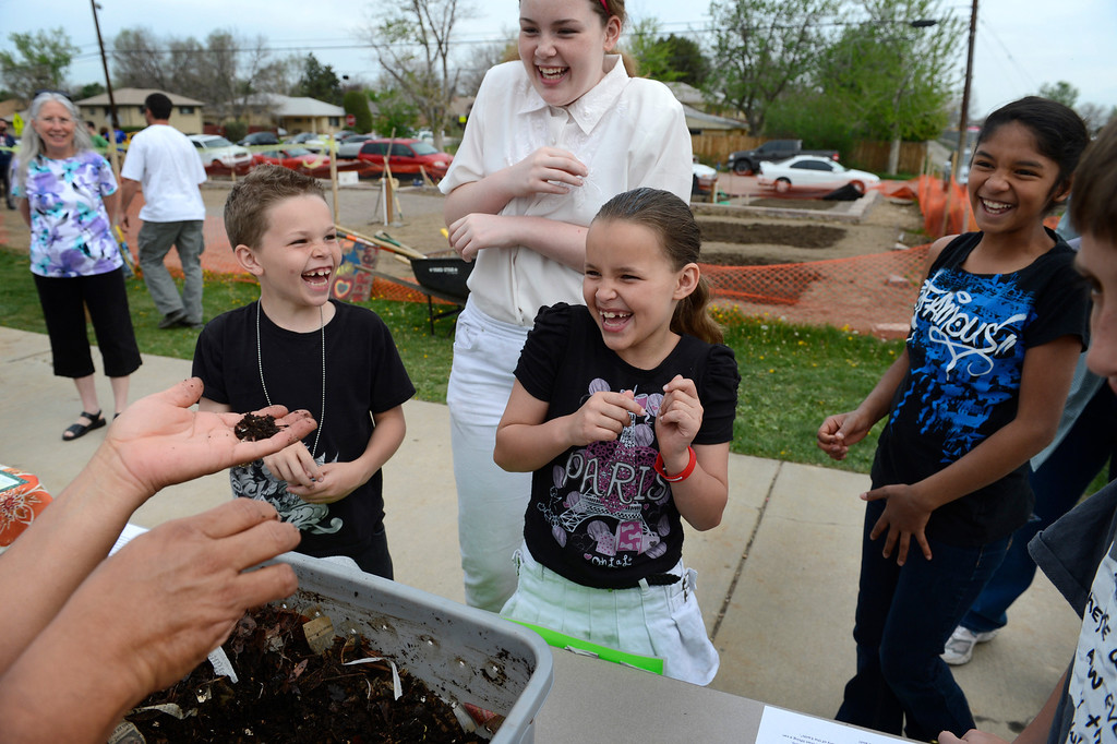 """. AURORA, CO. - MAY 18: (l-r) Saiah Brydon, 8, and his sisters, Sierra, 12, and Serenity, 8, react while learning about compost during the North Middle School Garden Festival in Aurora, CO May 18, 2013. The youths had just been informed that the worm castings they were smelling is also called \""""worm poop.\""""  The celebration marked the opening of the first school-based community garden in Aurora Public Schools. The project, funded by The Piton Foundation, was made possible through a partnership of Aurora Public Schools, Denver Urban Gardens (DUG), and Anschutz Medical Campus Department of Family Medicine and BRANCH, a multi-disciplinary student organization from the medical campus. A second garden is scheduled to open later this year at Hinkley High School. (Photo By Craig F. Walker/The Denver Post)"""