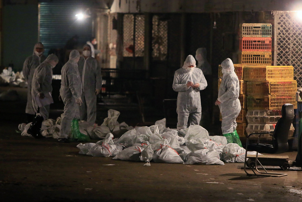 . Technicians wearing protection suits begin to cull poultry at a poultry wholesale market, where H7N9 bird flu virus was detected in pigeon samples, in Shanghai, April 5, 2013. China said it was mobilising resources nationwide to combat a new strain of bird flu that has killed six people, as Japan and Hong Kong stepped up vigilance and the United States said it was closely monitoring the situation. All of the 14 reported infections from the H7N9 bird flu strain have been in eastern China and at least four of the six dead are in the financial hub of Shanghai, a city of 20 million people. REUTERS/Stringer