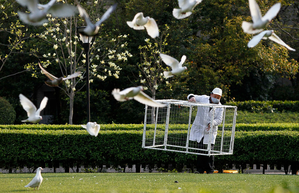 . A public park staff carries a cage to catch pigeons with at a public area in People Square, downtown Shanghai April 6, 2013. Health authorities in China said on Saturday that the country\'s 16 confirmed H7N9 bird flu cases were isolated and showed no sign that it is transmitted from human to human, Xinhua News Agency reported. Shanghai municipal government has ordered workers to remove pigeons from public area to prevent the spread of H7N9 bird flu to humans, local media reported.  REUTERS/Aly Song