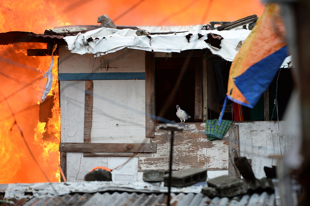 . A pet pigeon stands on a window as a fire engulfs homes at a shanty town in the financial district of Manila on July 11, 2013, leaving more than 1,000 people homeless according to city officials. There were no immediate reports of casualties from the blaze, which occurred mid-morning amid government plans to relocate thousands of families living in areas vulnerable to floods and typhoons. TED ALJIBE/AFP/Getty Images