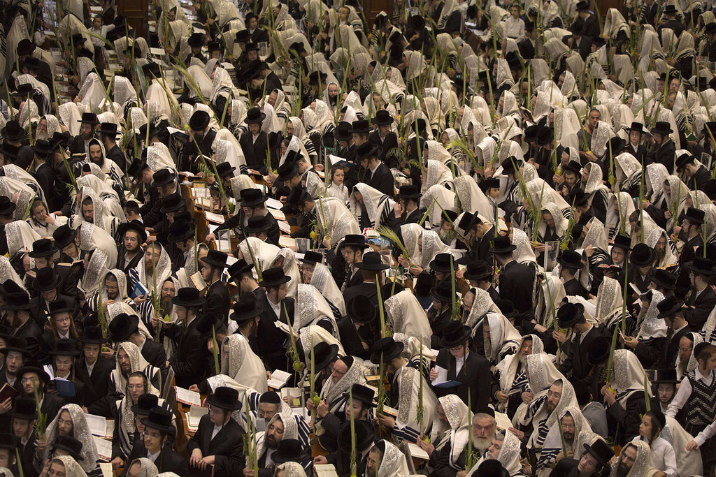 . Ultra-Orthodox Jews of the Belz Hasidic Dynasty hold the four plant species: the Lulav (palm leave stalk), the Etrog (citrus), the Hadas (myrtle) and the Arava (willow-branches), as they pray during the last day of Sukkot, or the feast of the Tabernacles, at their synagogue in  Jerusalem on September 25 , 2013.  MENAHEM KAHANA/AFP/Getty Images