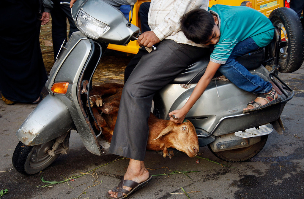 . A young Indian boy holds on to his goat as he sits behind his father on a scooter ahead of the Muslim festival of Eid al-Adha in Hyderabad, India, Tuesday, Oct. 15, 2013. (AP Photo/Mahesh Kumar A.)