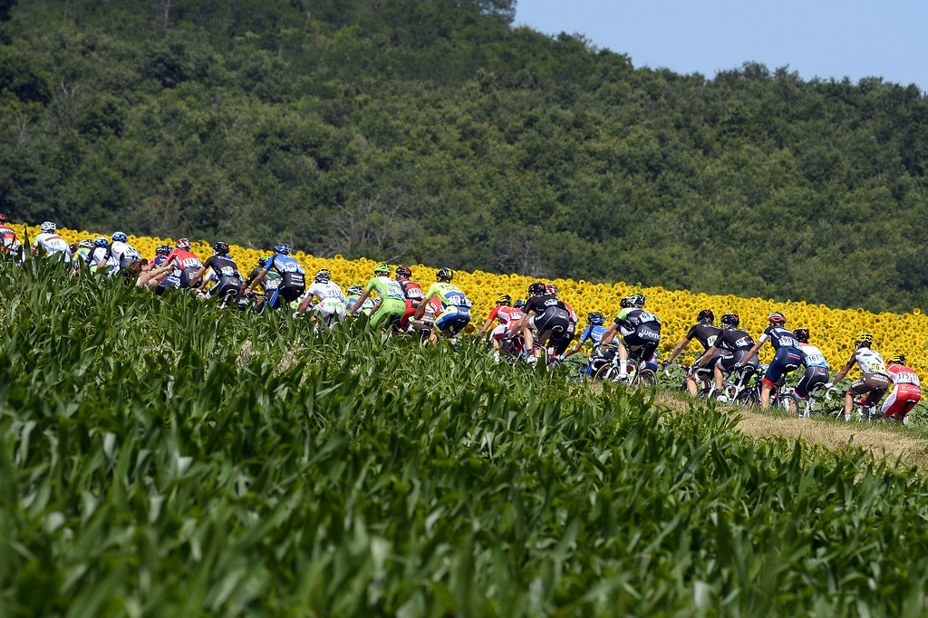 . The pack rides past a sunflowers field during the 237.5 km sixteenth stage of the 101st edition of the Tour de France cycling race on July 22, 2014 between Carcassonne and Bagneres-de-Luchon, southwestern France.  AFP PHOTO / LIONEL  BONAVENTURE/AFP/Getty Images