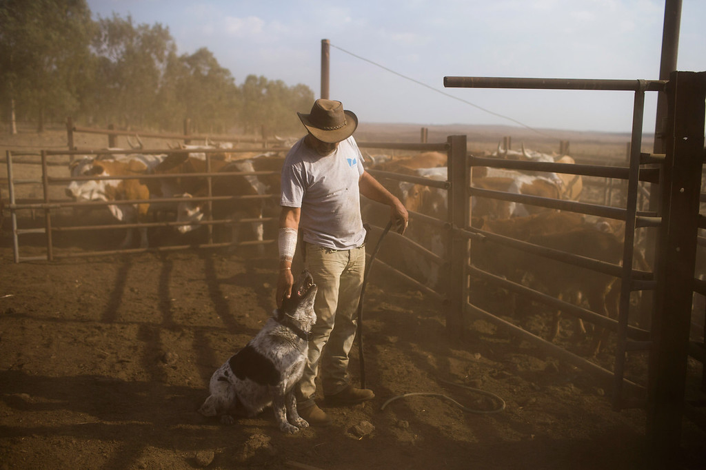 . Israeli cowboy Wafik Ajamy plays with his dog at the Merom Golan ranch on November 14, 2013 in the Israeli-annexed Golan Heights. Israeli cowboys have been growing beef cattle in ranches on the Golan Heights disputed strategic volcanic plateau for over 30 years, Land which is also used by the Israeli army as live-fire training zones. The disputed plateau was captured by Israel from the Syrians in the 1967 Six Day War and in 1981 the Jewish state annexed the territory.   (Photo by Uriel Sinai/Getty Images)