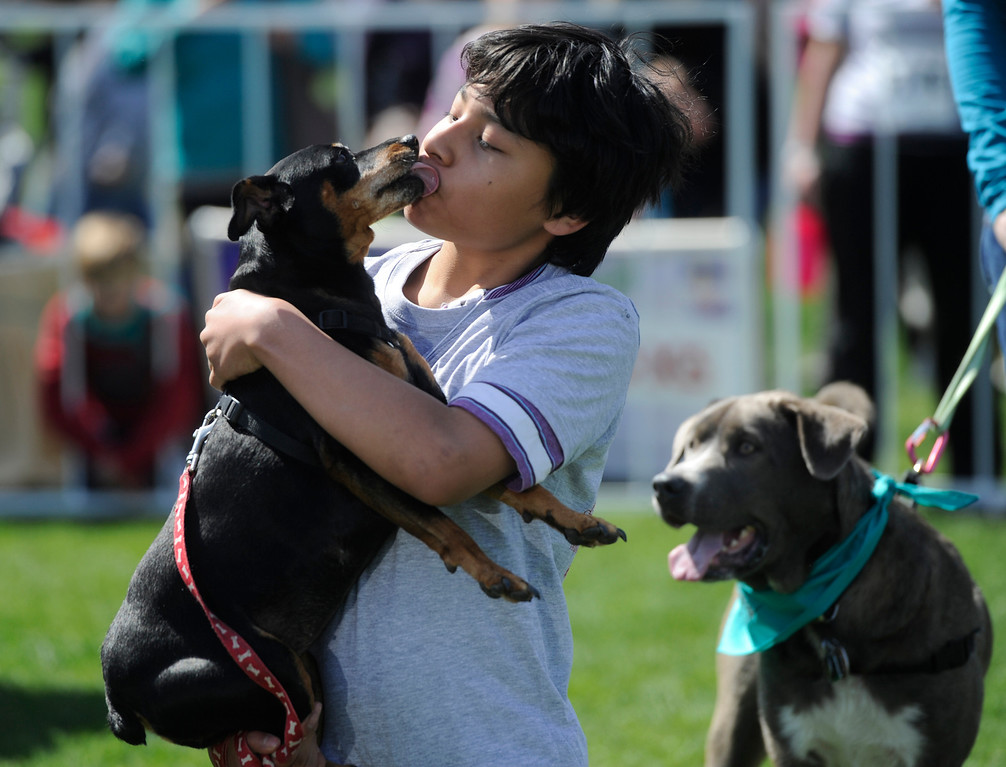 . DENVER, CO - MAY 4:  Elias Thornton-Kolbe, 10, gets a face full from his dog, �Pucca,� during the Best Pet Kisser contest during the 20th annual Denver Dumb Friends League fundraiser, �Furry Scurry,� at Washington Park, Saturday, May 4, 2013. Over 12,000 people and 5000 dogs participated in the two-mile walk around the park and enjoyed refreshments, contests, demonstrations and many pet-related sponsors and vendors. (Photo By Andy Cross/The Denver Post)