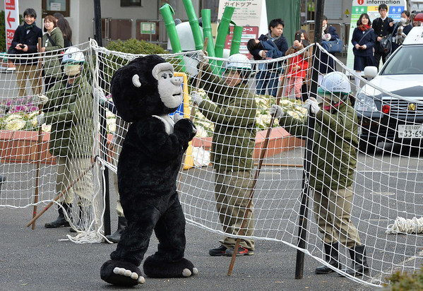 PHOTOS: Escaped gorilla training in Tokyo