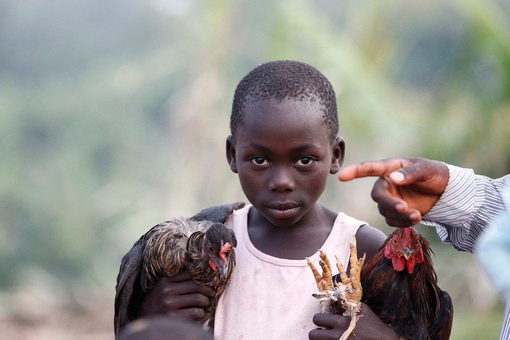 . A girl, a Congolese refugee displaced by fighting between the Congo army and rebel group Allied Democratic Forces (ADF) last week, carries chickens as she arrives at Bukanga transit camp in Bundibugyo town camp 376km (238 miles) southwest of Uganda capital Kampala July 16, 2013. The Uganda Red Cross Society said 66,000 Congolese refugees have so far crossed into the east African country since the Allied Democratic Forces (ADF) started attacking the eastern Democratic Republic of Congo town of Kamangu last week. REUTERS/James Akena