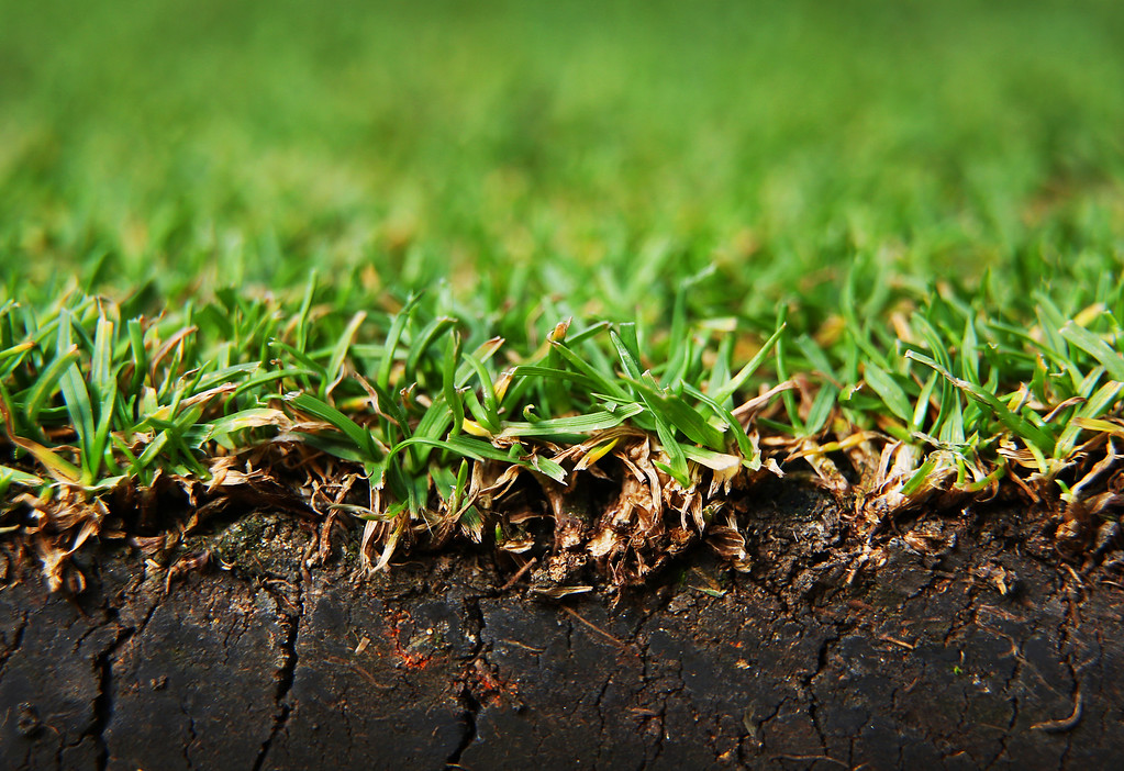 . LONDON, ENGLAND - JULY 02:  A close up photograph shows the grass on Centre Court at the Wimbledon Lawn Tennis Championships on July 2, 2013 in London, England. (Photo by Peter Macdiarmid/Getty Images)