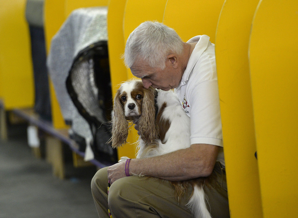 . A handler waits with his dog before he competes in the Agility Ring during the First-ever Masters Agility Championship on February 8, 2014 in New York at the 138th Annual Westminster Kennel Club Dog Show. Dogs entered in the Agility trial will be on hand to demonstrate skills required to negotiate some of the challenging obstacles that they will need to negotiate.   TIMOTHY A. CLARY/AFP/Getty Images
