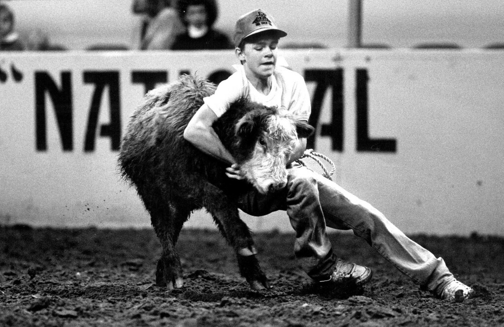 """. Joe Blundell of Las Animas works to take down a heifer during the Future Farmer\'s of America \""""Heifer Wrangle\"""" during the afternoon matinee at the National Western Stock Show Rodeo. Blundell and other FFA members statewide fought with uncooperative heifers as part of a FFA program which awards a sponsored prize for a successful takedown and bringing the tied calf back to the pens. Damian Strohmeyer, The Denver Post"""