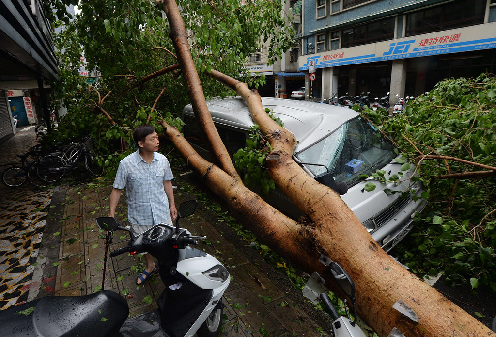 ". A man views a vehicle damaged by fallen trees after Typhoon Soulik hit Taipei on July 13, 2013.  housands of people were evacuated in Taiwan and the entire island declared an ""alert zone\"" as Typhoon Soulik made landfall, killing one person and injuring seven. MARK RALSTON/AFP/Getty Images"