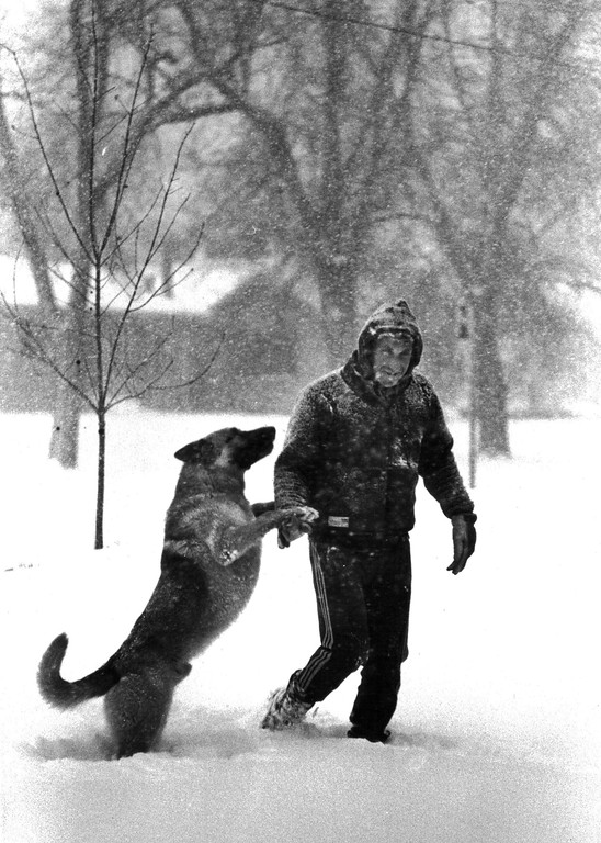 . A man walks his dog in the Blizzard of \'82. Denver Post Library Archive