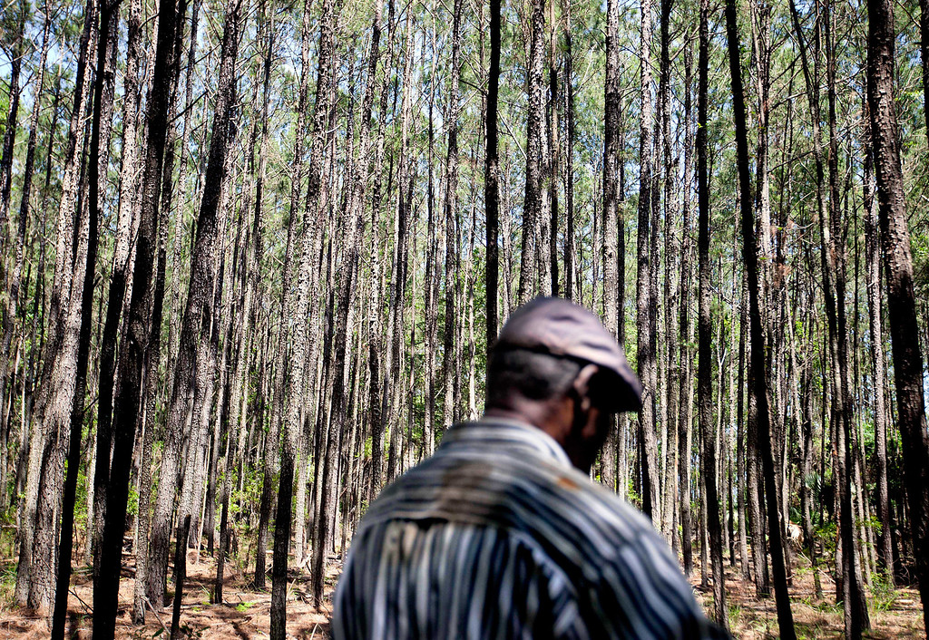 """. In this May 15, 2013 photo, Stephen Wilson, 68, walks through the forest on his property where his home that his father built stands in the Hog Hammock community of Sapelo Island, Ga. on Wednesday, May 15, 2013. \""""Dad built this house with his labor. Every time I put the key in the door coming home as a child, I remember saying, \'Hi, papa. Hi, mama.\' It has a lot of remembrance.\"""" (AP Photo/David Goldman)"""