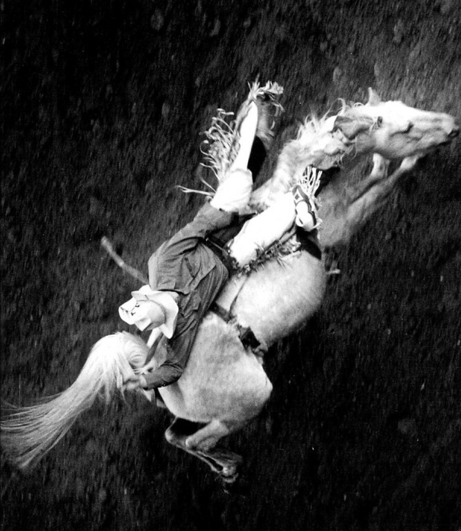 """. \"""" And Away He Goes \"""" - A cowboy holds on for the ride, during the bronc riding contest at the National Western Stock show and rodeo. 1991. Denver Post Library photo archive"""