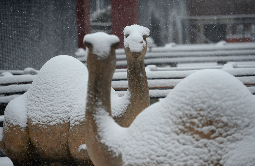 . Two concrete camels stand covered with snow at a playground as a snow storms New York, March 8, 2013. The storm, part of the same system that pummeled the Midwest earlier this week, is expected to dump two to five inches of snow before to fully conclude by early evening. AFP PHOTO/EMMANUEL  DUNAND/AFP/Getty Images