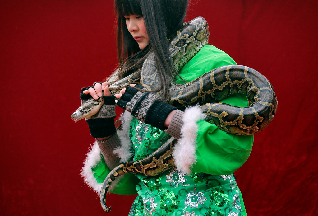 . A performer carries a python for a show at the Ditan Temple Fair celebrating the Chinese Lunar New Year in Beijing February 11, 2013. REUTERS/Jason Lee