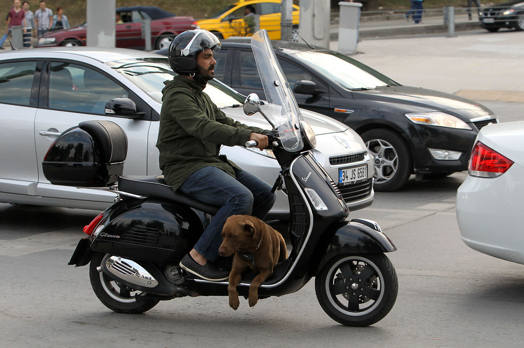 . A rider drives a scooter with his dog at Besiktas, the area where most of the clashes between police and protesters took place the last days, in Istanbul, on Tuesday, June 4, 2013.   (AP Photo/Thanassis Stavrakis)