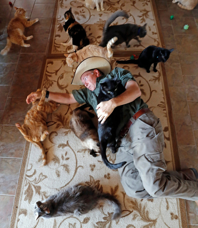 . Leo Grillo plays with cats at his DELTA (Dedication & Everlasting Love to Animals) Rescue complex in Acton, Calif. on Aug. 29, 2013. (AP Photo/Reed Saxon)