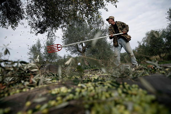 PHOTOS: Olive oil production affected by financial crisis in Greece