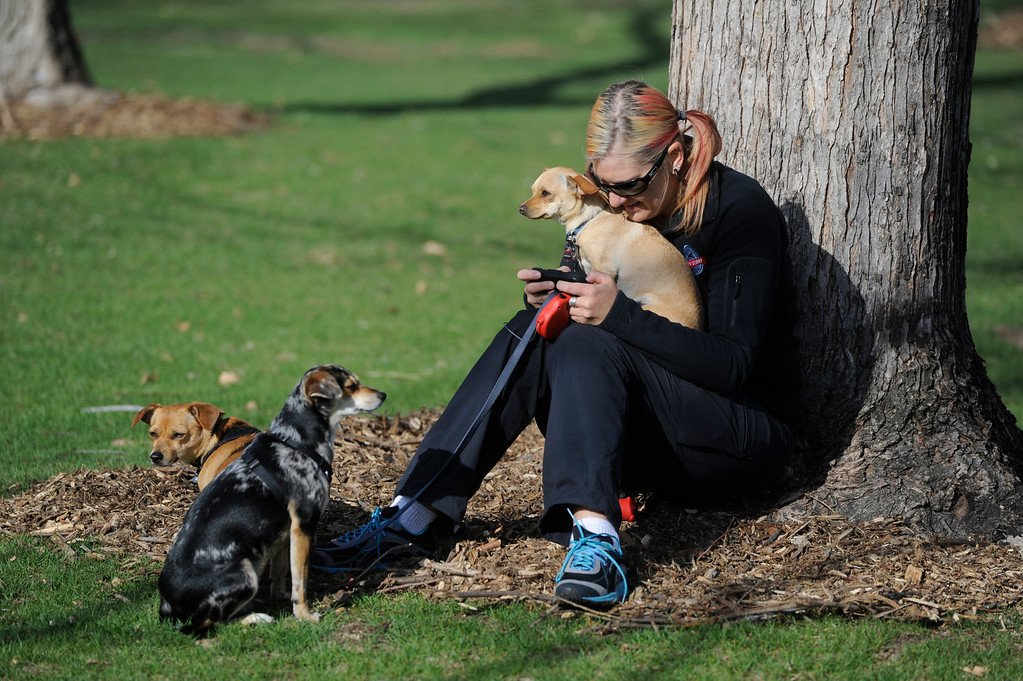 . DENVER, CO - MAY 4:  Sarah Gjerpson, from Denver, sends a text message under a tree while spending time with her dogs, left to right, Twinkie, Dharma, and Minnow, all shelter/mix dogs at the 20th annual Denver Dumb Friends League fundraiser, �Furry Scurry,� at Washington Park, Saturday, May 4, 2013. Over 12,000 people and 5000 dogs participated in the two-mile walk around the park and enjoyed refreshments, contests, demonstrations and many pet-related sponsors and vendors. (Photo By Andy Cross/The Denver Post)