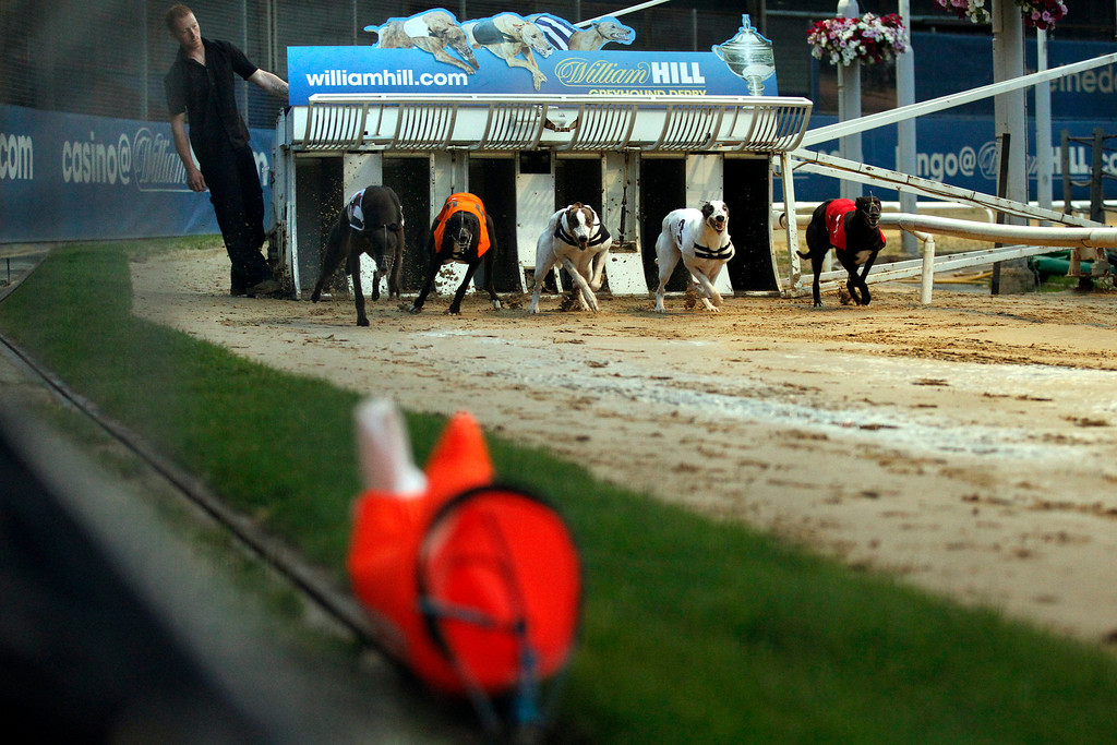 . Greyhounds bolt out of the gate to chase a lure during a race at Wimbledon Stadium in London May 28, 2011. In 1947, 60,000 spectators were recorded at the Derby at White City, one of 21 greyhound tracks then operating in London. In 2011 the Derby was held at Wimbledon Stadium ó now the only dog track left in London�ó and attendance was just 2,423. Picture taken May 28, 2011. REUTERS/Chris Helgren
