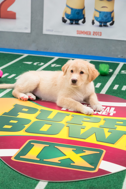. Dogs playing on the field during Puppy Bowl IX(Photo credit: Animal Planet)