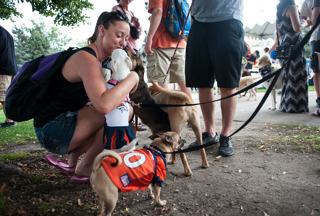 . Jessica O\'Brien, left, plays with a group of dogs while visiting Woof Fest! in downtown Denver, Colorado, Sunday, August 17, 2014. The free festival included two music stages, food trucks, and space for pets and their owners to play. ((Photo By Brenden Neville/Special to The Denver Post))