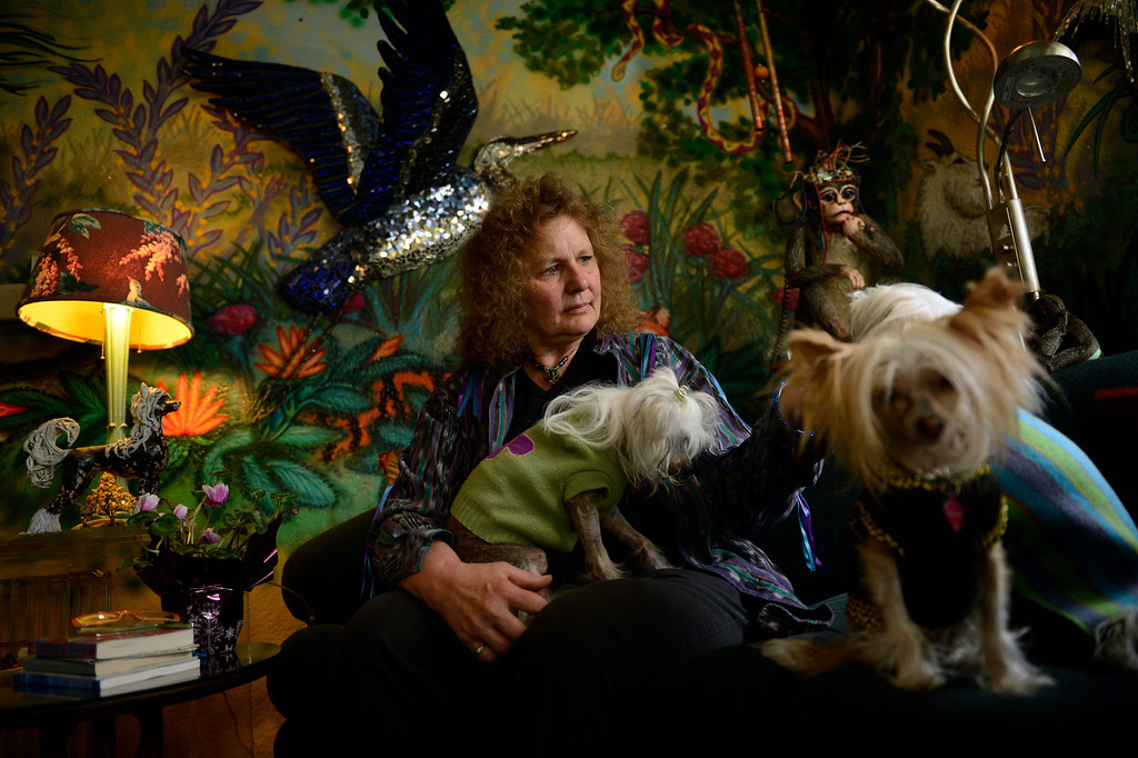 . Edgewater, CO. - January 28:  Artist Dede LaRue with her Chinese Crested Dog\'s in her home studio in Edgewater, Colorado. January 28, 2013. (Photo By Joe Amon / The Denver Post)