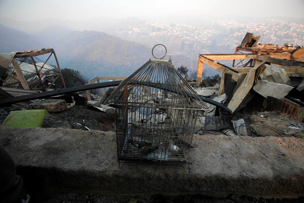 . Birds lie dead inside a birdcage after a large forest fire reached urban areas in Valparaiso, Chile, Sunday April 13, 2014. Authorities say the fires have destroyed hundreds of homes, forced the evacuation of thousands and claimed the lives of at least seven people.  ( AP Photo/ Luis Hidalgo)