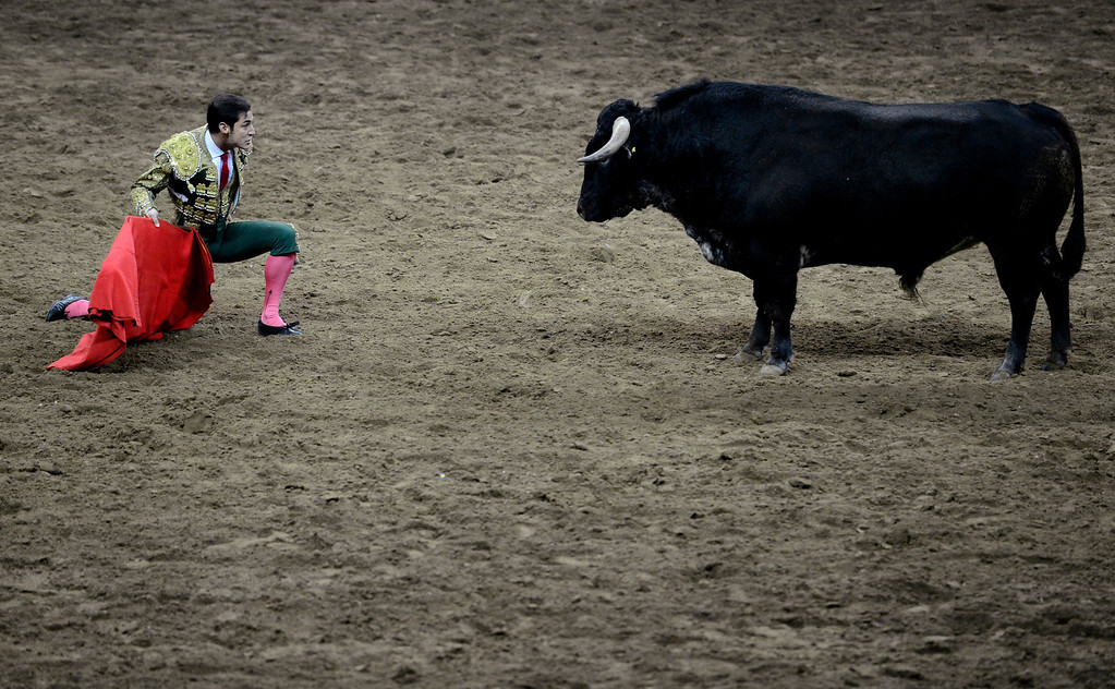 . Matador Alfredo Gutierrez kneels in front of the bull during National Western Stock Show\'s Mexican Rodeo Extravaganza at the Denver Coliseum on Sunday, Jan. 13, 2013. AAron Ontiveroz, The Denver Post