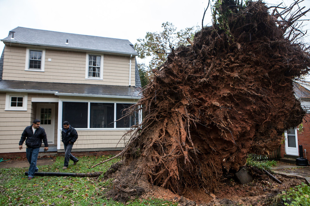 . Men survey a large tree that fell during Hurricane Sandy on October 30, 2012 in Washington, DC. The storm has claimed at least 33 lives in the United States, and has caused massive flooding across much of the Atlantic seaboard. US President Barack Obama has declared the situation a \'major disaster\' for large areas of the US East Coast including New York City, with wide spread power outages and significant flooding in parts of the city. (Photo by Brendan Hoffman/Getty Images)