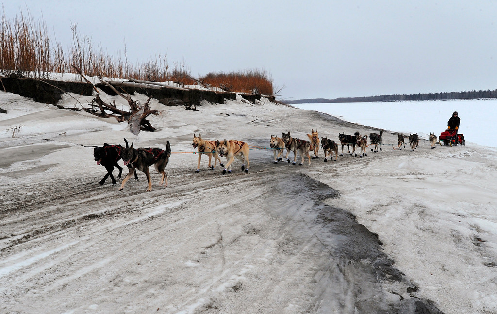 . Four-time Iditarod champion Jeff King crosses an island in the Yukon River about 3 miles from the checkpoint in Anvik, Alaska, during the Iditarod Trail Sled Dog Race on Friday, March 8, 2013. (AP Photo/Anchorage Daily News, Bill Roth)