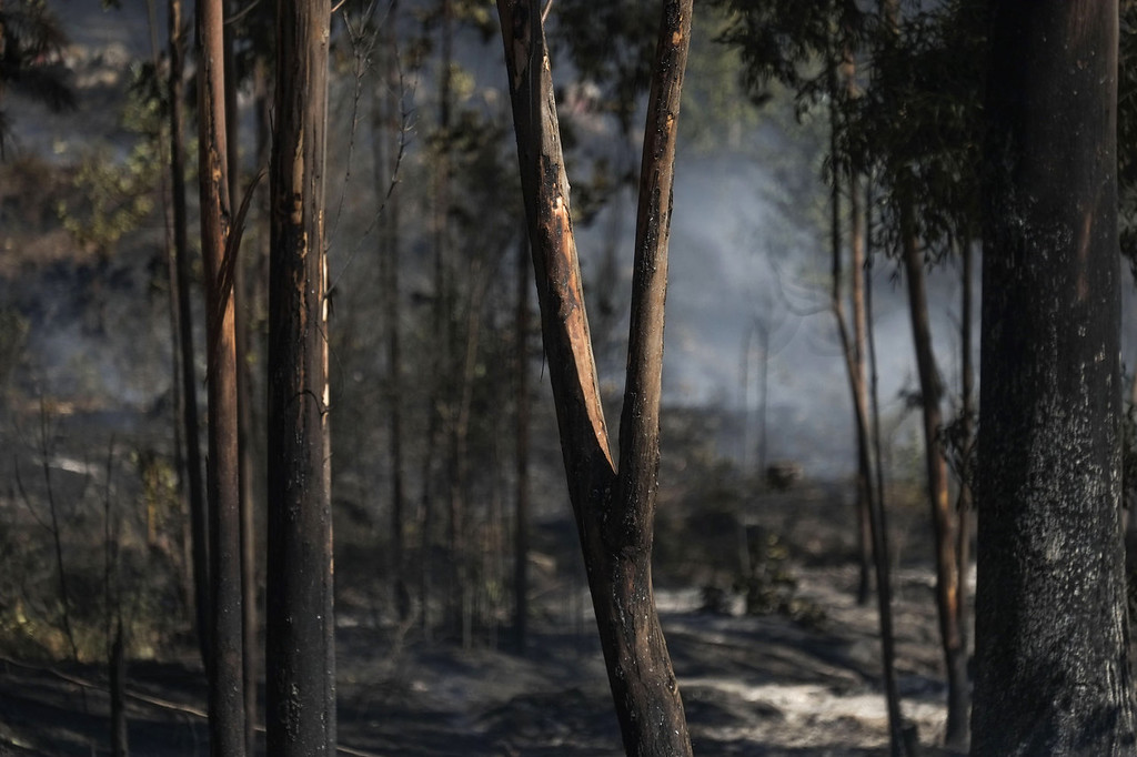 . Trees still smolder at the site of a wildfire in O Rosal near Pontevedra, on August 29, 2013.  Spain is prone to forest fires in summer because of soaring temperatures, strong winds and dry vegetation.  Last year wildfires destroyed some 150,000 hectares of land in Spain from January to July, after one of the driest winters on record.   PEDRO ARMESTRE/AFP/Getty Images