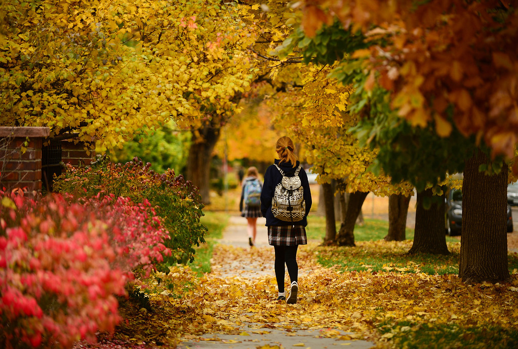 Description of . Fall in Colorado can be beautiful.  This captures the beauty of fall in Denver with kids heading back to school for the season.  DENVER, CO - OCTOBER 30:   Emma Skau, 13, makes her way home after school down 7th Ave. Parkway amidst the beautiful fall colors in Denver, Co on October 30, 2013. Leaves of gold, red, orange and yellow fill the trees in Cheeseman Park and across the metro area. (Photo By Helen H. Richardson/ The Denver Post)
