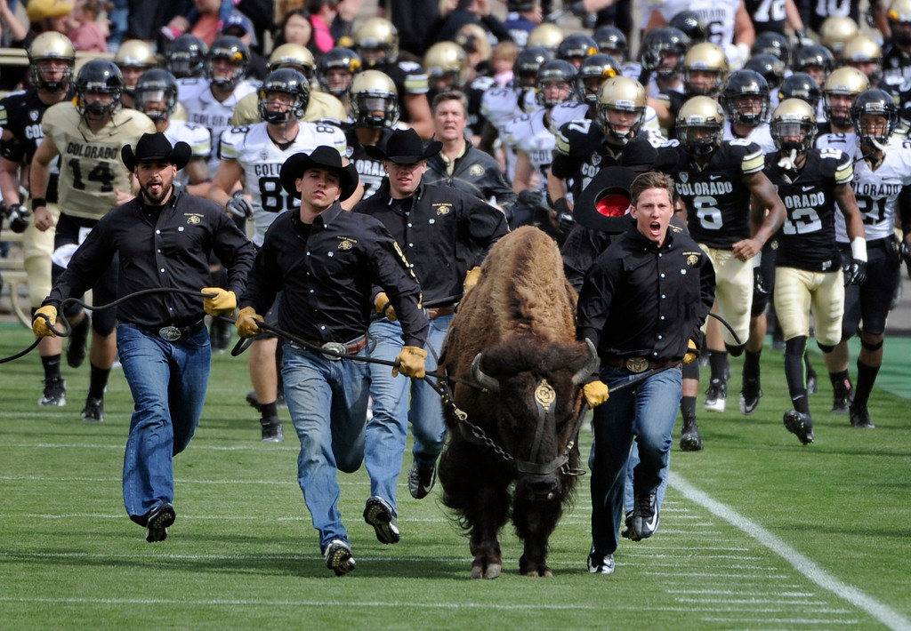 . BOULDER, CO.- APRIL13: Ralphie, the CU mascot romps on to the field with the team close behind at the start of the game.The University of Colorado football team hosts its spring football game at Folsom Field under the direction of new head coach Mike MacIntyre. (Photo By Kathryn Scott Osler/The Denver Post)