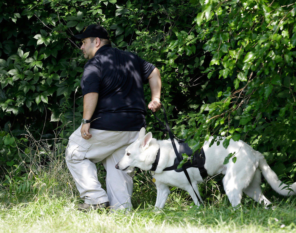 . An investigator and his  dog search a wooded area Sunday, July 21, 2013 near where three bodies were recently found in East Cleveland, Ohio. Searchers rummaging through vacant houses in a neighborhood where three female bodies were found wrapped in plastic bags should be prepared to find one or two more victims, a police chief said Sunday. (AP Photo/Tony Dejak)