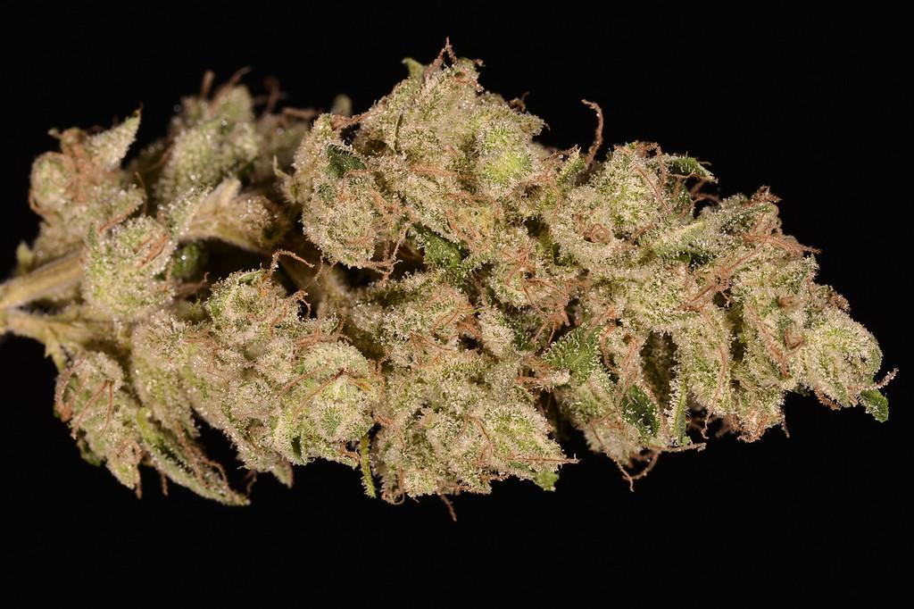 . No. 13: Super Silver Sour Diesel Haze (Ry Prichard, The Cannabist)