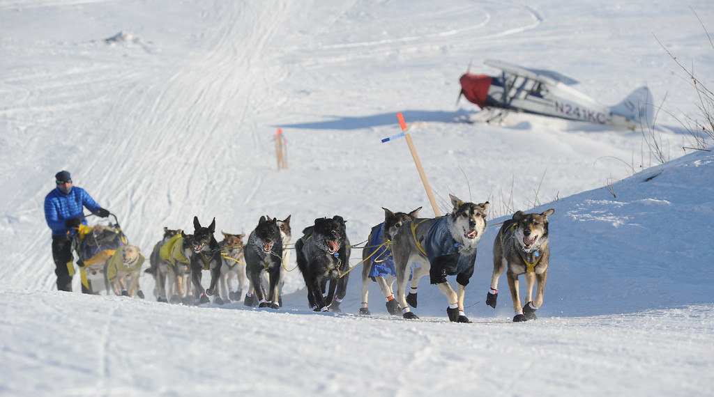 . Hans Gatt drives his team off the Yukon River into the village of Kaltag during the 2014 Iditarod Trail Sled Dog Race on Saturday, March 8, 2014. (AP Photo/The Anchorage Daily News, Bob Hallinen)