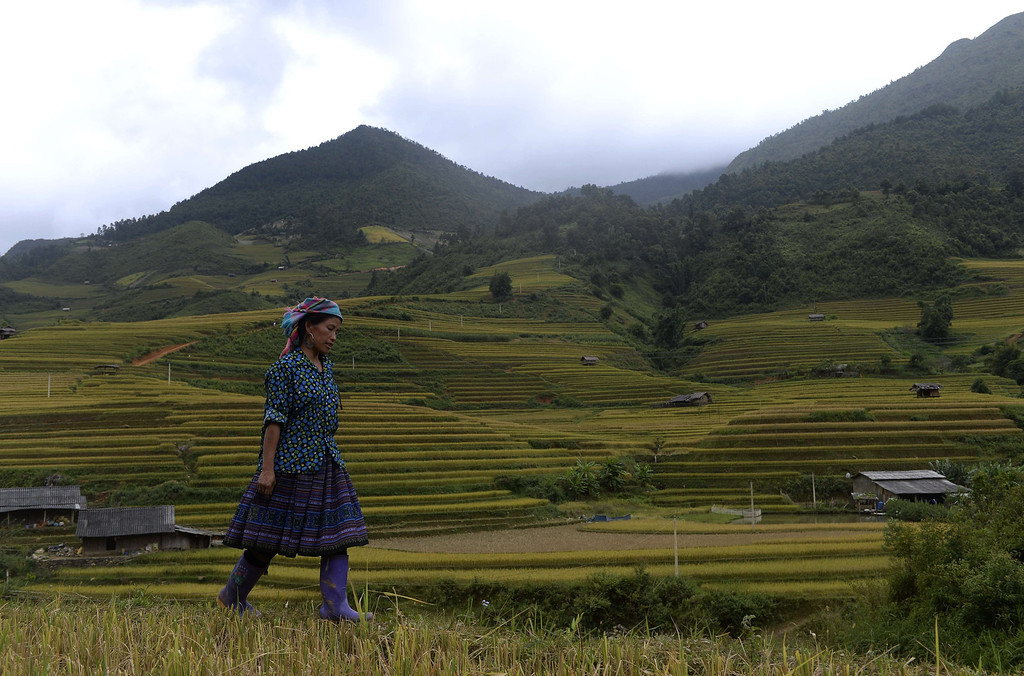 . This picture taken on October 2, 2013 shows a Hmong ethnic hill tribe woman walking on a terrace rice field in Mu Cang Chai district, in the northern mountainous province of Yen Bai. The local residents, mostly from the Hmong hill tribe, grow rice in the picturesque terrace fields whose age is estimated to hundreds years. Due to hard farming conditions, especially irrigation works, locals produce only one rice crop per year. In recent years a growing numbers of tourists have been attracted by the beautiful landscapes created by the region\'s rice terrace fields.  HOANG DINH NAM/AFP/Getty Images