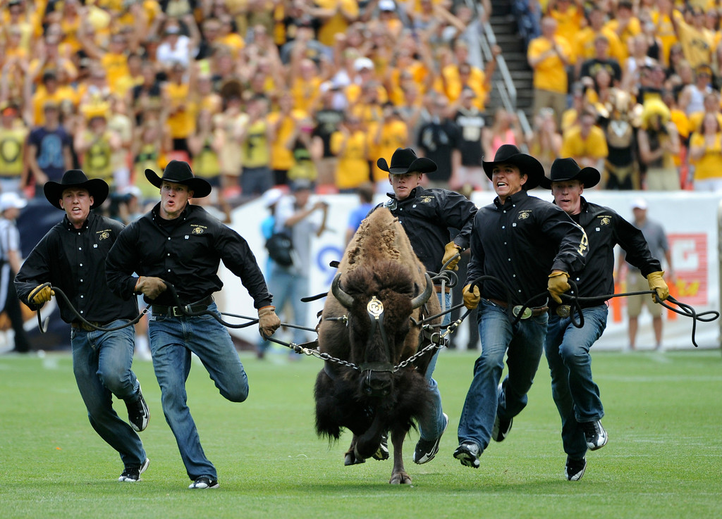 """. CU\'s live mascot \""""Ralphie\"""" runs on to the field at the start of the game. The University of Colorado football team takes on Colorado State University for the Rocky Mountain Showdown at Sports Authority Field at Mile High in Denver on Saturday, Sept. 1, 2012. Kathryn Scott Osler, The Denver Post"""