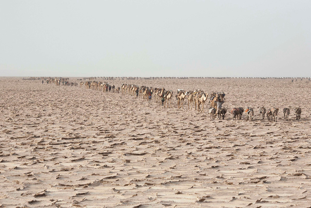 . Men walk with their camels through the Danakil Depression, northern Ethiopia April 22, 2013. Once the caravan find a suitable place to mine salt, they extract, shape and pack as many salt slabs as possible before starting their two-day journey to the town of Berahile. The Danakil Depression in Ethiopia is one of the hottest and harshest environments on earth, with an average annual temperature of 94 degrees Fahrenheit (34.4 Celsius). For centuries, merchants have travelled there with caravans of camels to collect salt from the surface of the vast desert basin. The mineral is extracted and shaped into slabs, then loaded onto the animals before being transported back across the desert so that it can be sold around the country. Picture taken April 22, 2013. REUTERS/Siegfried Modola