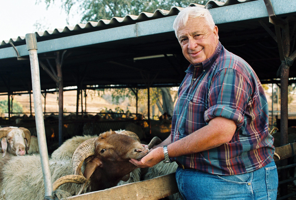 . A picture made available in January 2014 dated from September 1993 of former Israeli Prime Minister Ariel Sharon at his sheep during a photo session on his farm in Shikmim, southern Israel.  EPA/GIDEON MARKOWICZ ISRAEL OUT