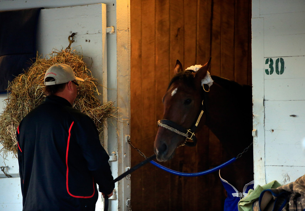 . Kentucky Derby competitor Wicked Strong is seen in his barn stall during early morning workouts ahead of the 140th Kentucky Derby at Churchill Downs on May 2, 2014 in Louisville, Kentucky.  (Photo by Jamie Squire/Getty Images)